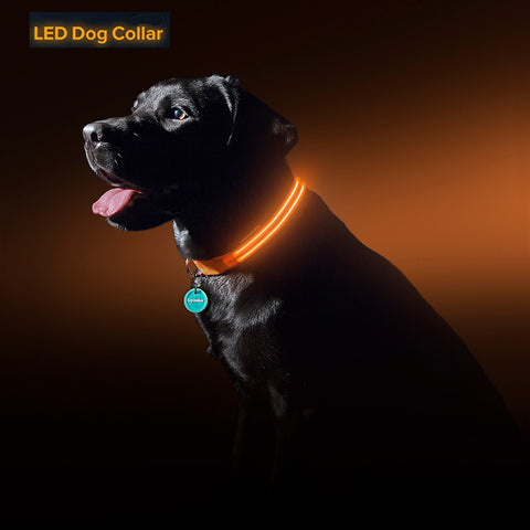 Best Led Dog Collar - USB Rechargeable Glow