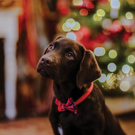 Teach your Christmas puppy the 8 essential skills he needs to know