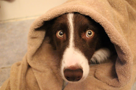 Is Your Dog in Duress? Top 5 Signs Your Pup is Stressed and What You Can do to Help!