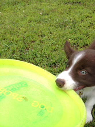 The Award-Winning Disc Dog that Once Couldn't Fetch