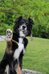 dog high five | paw care