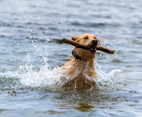 Dog playing in the water with SpotOn