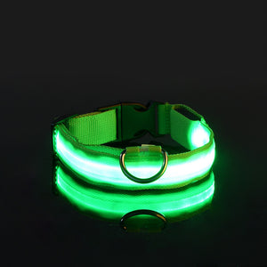 Safety LED USB Rechargeable Dog Collar