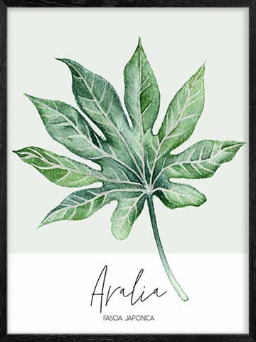 Aralia-leaf-watercolour-Botanical-Print-Affiche