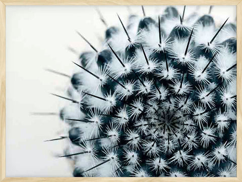 Cactus-Horizontal-botanical-photo-Poster-with-Frame