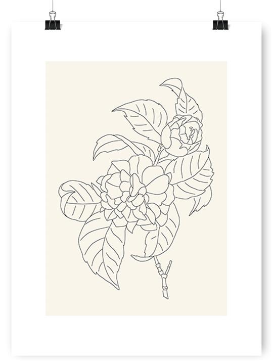 Camellia Drawing - Poster