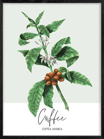 Coffee-Plant-Watercolor-Print-Affiche