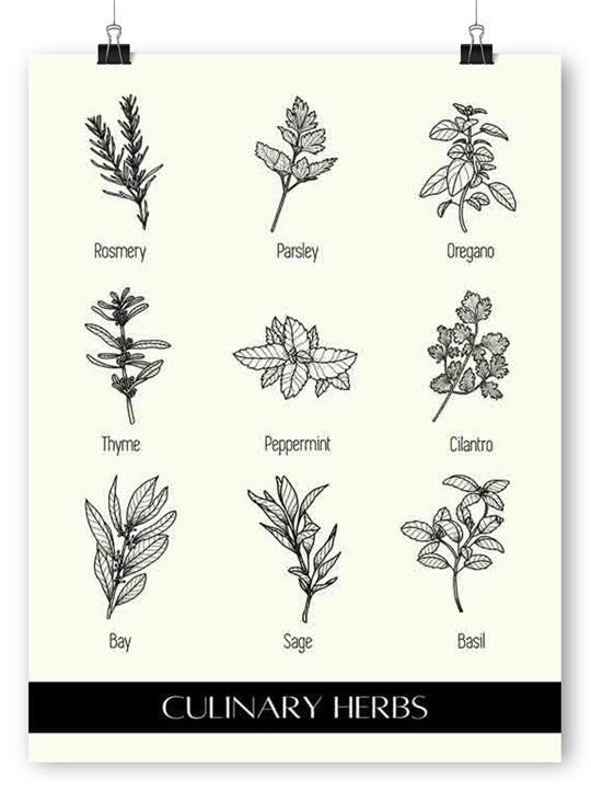 Culinary Herbs Cream- Poster