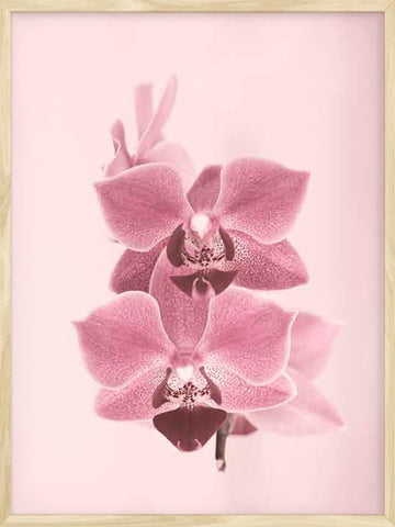 Dreamy-orchids-photo-nature-Poster-with-Frame