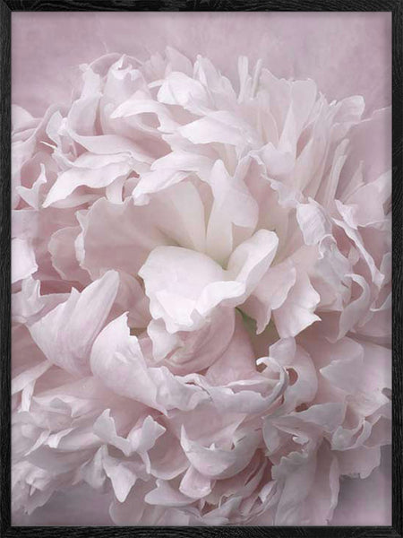 Dreamy Peony - Poster
