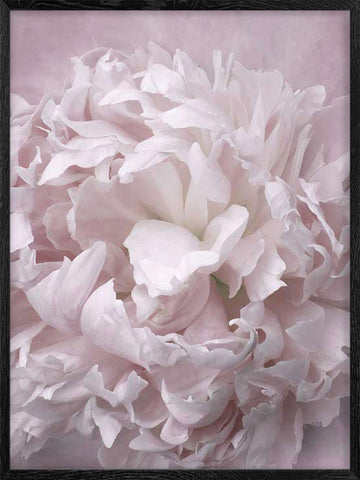 Dreamy-peony-floral-poster