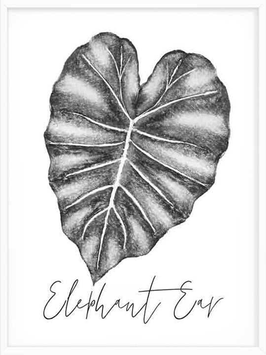 Elephant Ear Leaf B&W - Poster