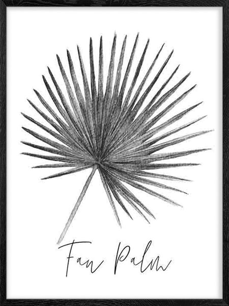 Fan Palm Leaf B&W - Poster