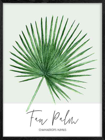 Fan-Palm-Watercolor-Print-Affiche