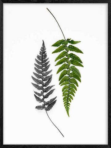 Ferns-Botanical-Poster-with-Frame
