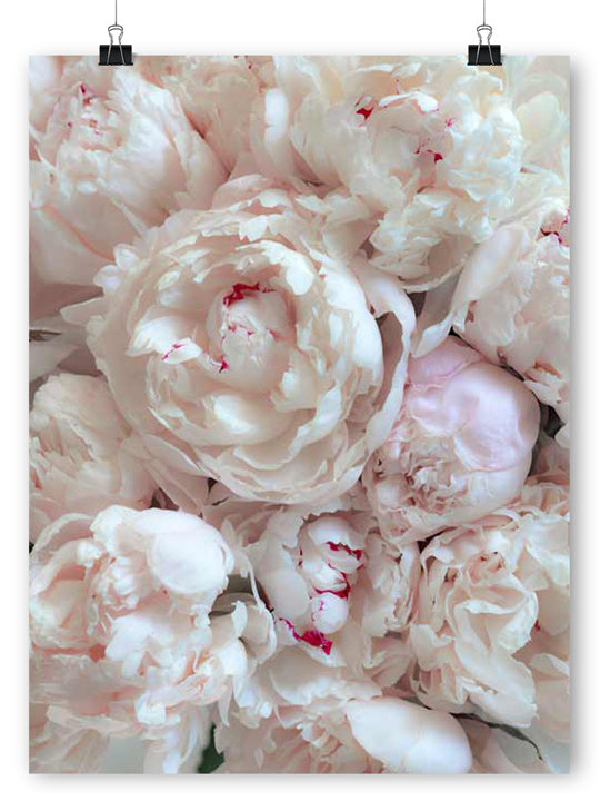 Peony Bouquet - Poster