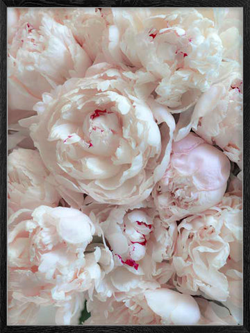 Peony-Bouquet-photography-botanical-poster