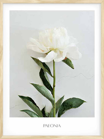 Peony-botanical-nature-print-decor