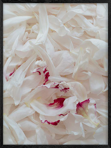 Petals-botanical-photography-art-print