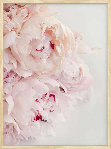Pink-Peonies-botanical-decor-print