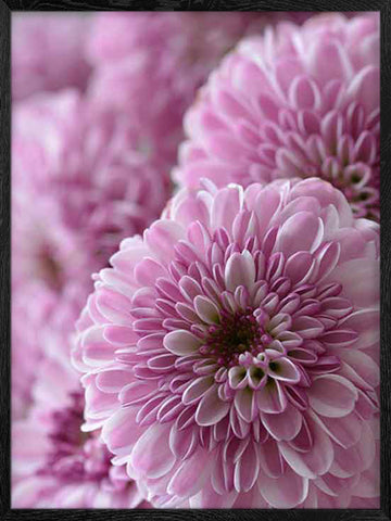 Spring-magenta-color-flowers-photo-print