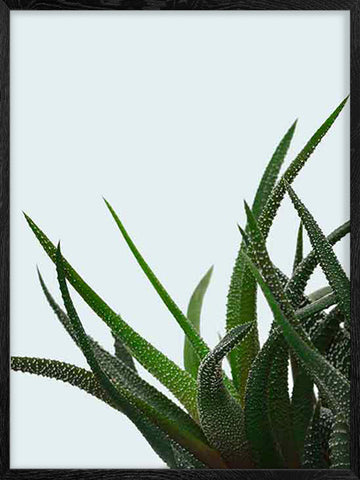 Succulent-2-Botanical-poster-with-frame