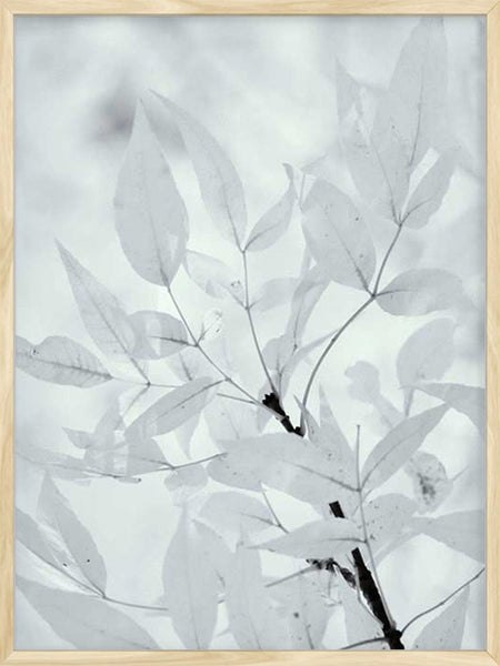 Leaves - Poster
