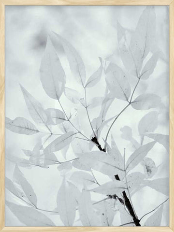 White-Leaves-Botanical-photgraphy-print