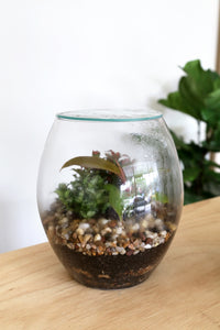 Forest Life Terrarium - Eco (Pebble) - PICK UP / LOCAL DELIVERY ONLY