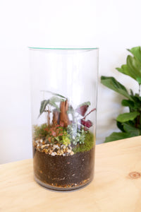 Forest Life Terrarium - Platinum - PICK UP / LOCAL DELIVERY ONLY