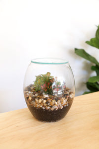 Forest Life Terrarium - Mini (Pebble) - PICK UP ONLY