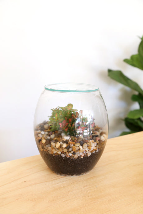 Forest Life Terrarium - Mini (Pebble) - PICK UP / LOCAL DELIVERY ONLY