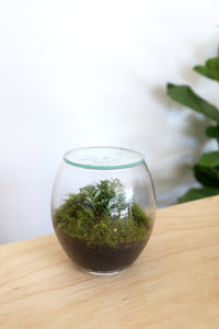 Forest Life Terrarium - Micro (Moss) - PICK UP ONLY