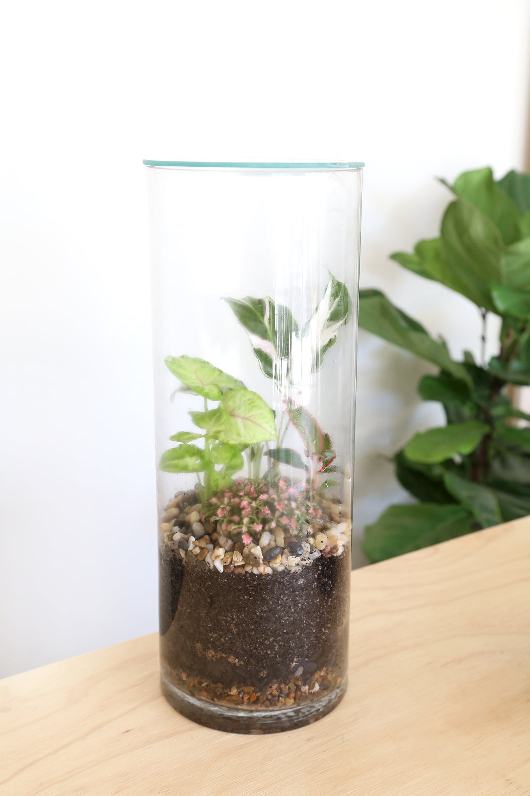 Forest Life Terrarium - Tropic (Pebble) - PICK UP / LOCAL DELIVERY ONLY