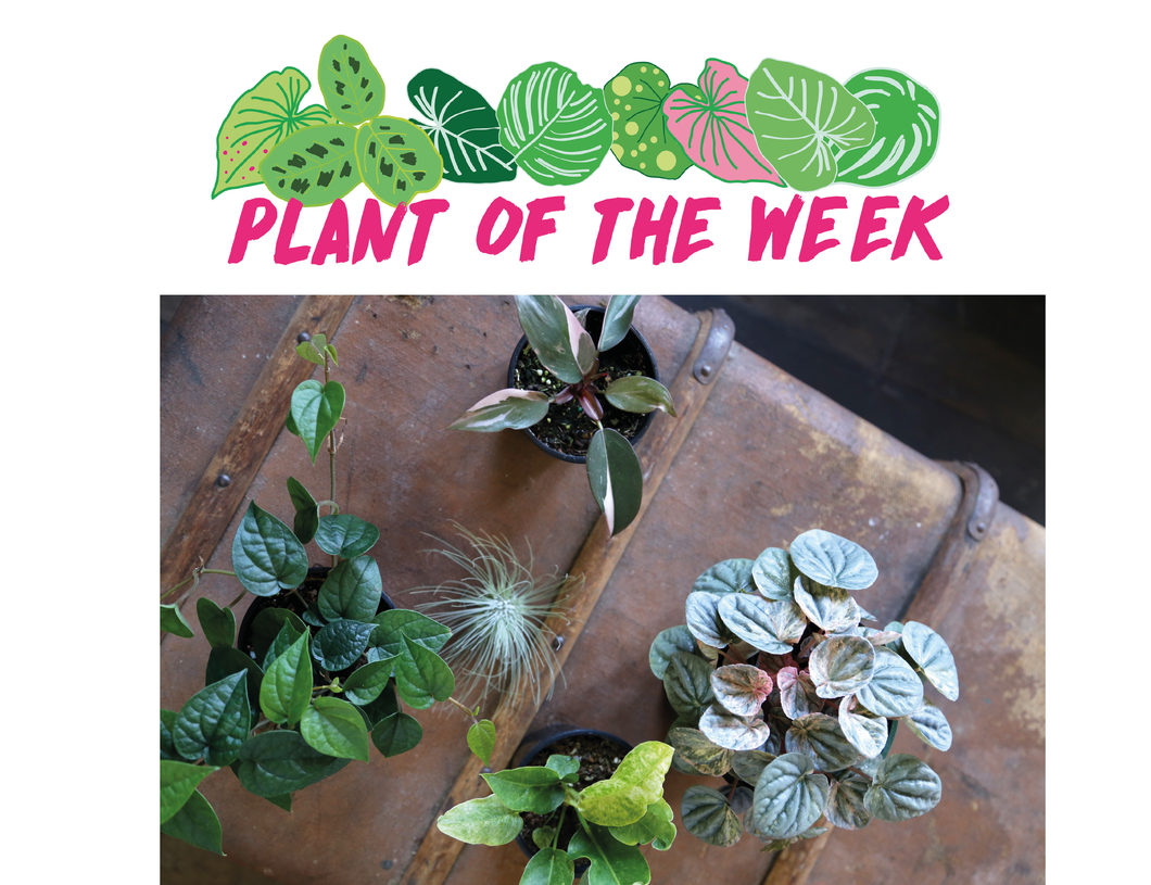 Plant of the Week - Subscription
