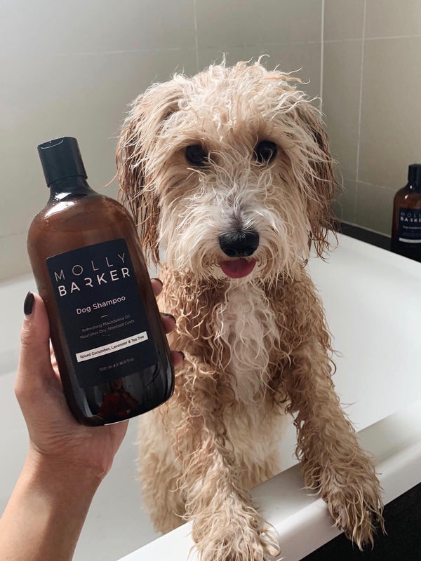 5 Reasons Why You Should Switch to Natural Dog Grooming Products