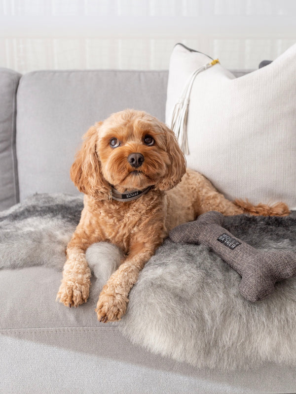 Tips for Creating A Stylish Dog Friendly Home