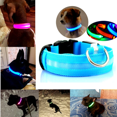 LED Rechargeable Dog Collar Dogs