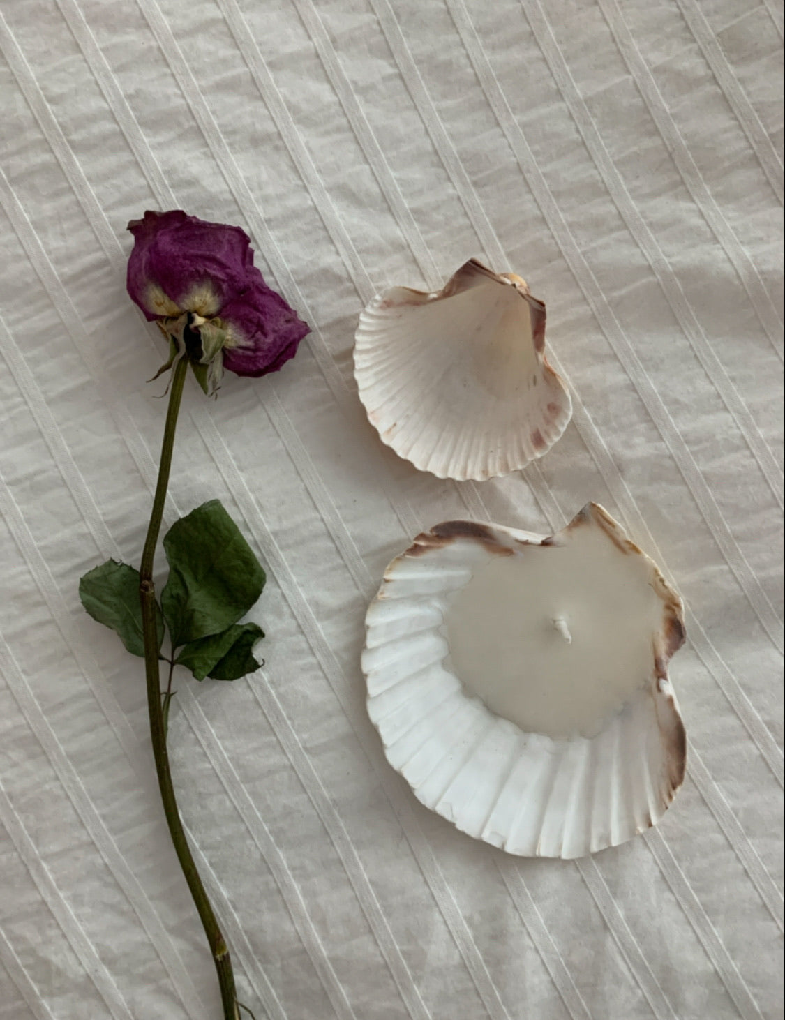 Mini Seashell Candle/Jewelry Dish