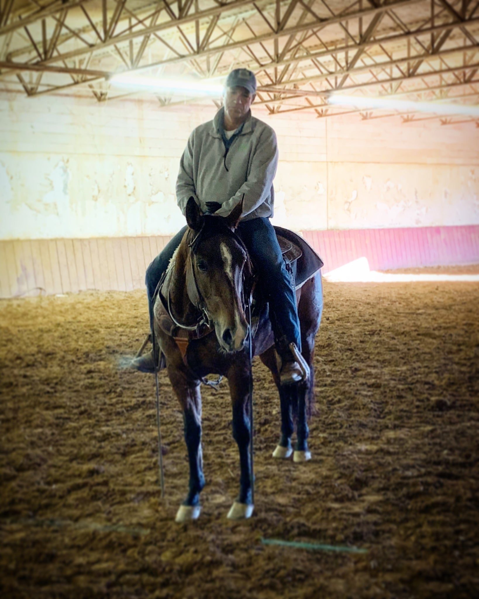 Pendry Performance Horses (Training, Boarding, Farrier, Transport and more)