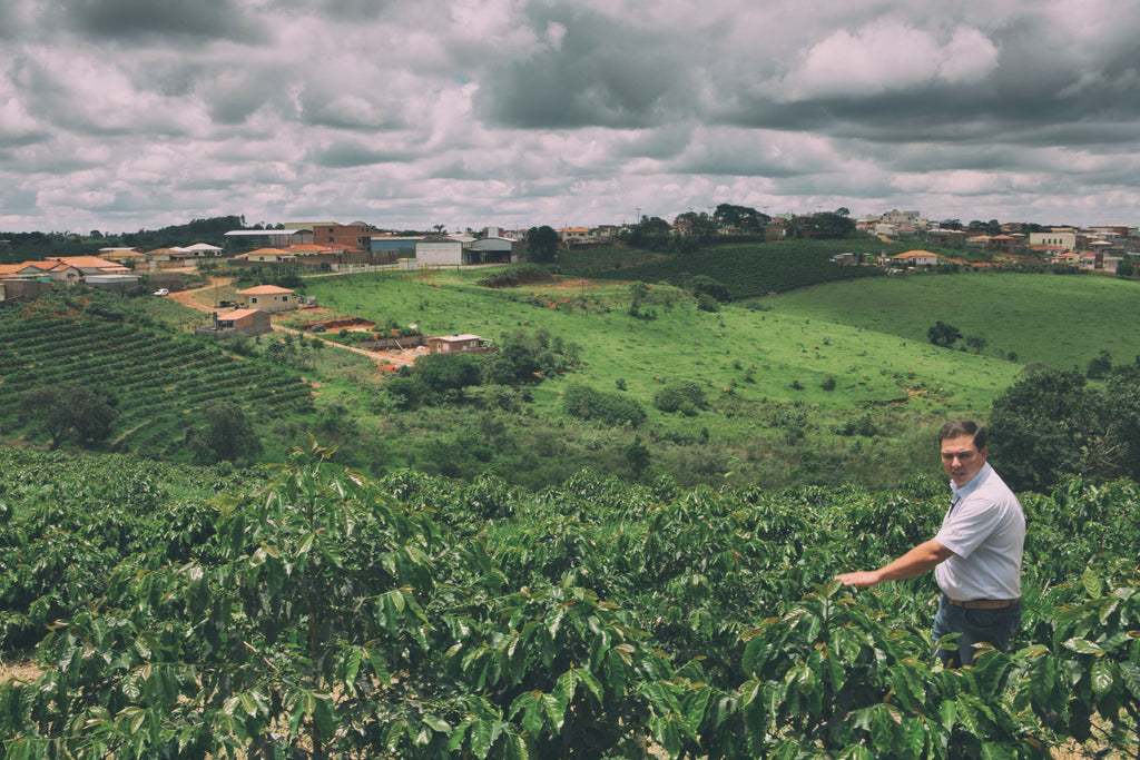 New Single Origin Coffee: Brazil Fazenda Rio Claro