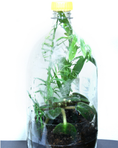 2 - Pop Bottle Terrarium - FOSH