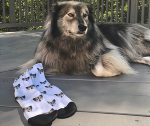 Face Socks For Pets