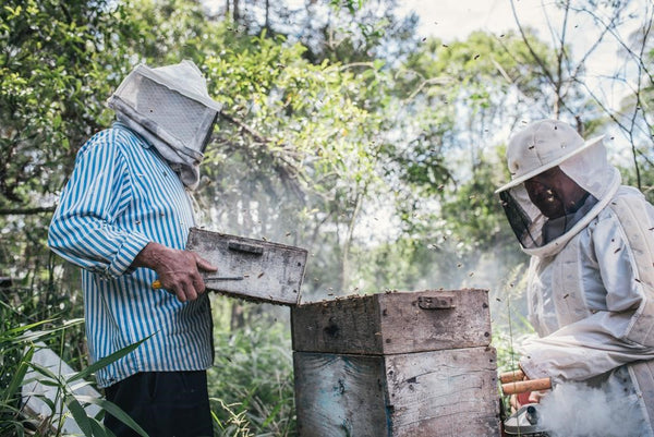 Beekeepers inspecting a hive - Direct Trade Honey