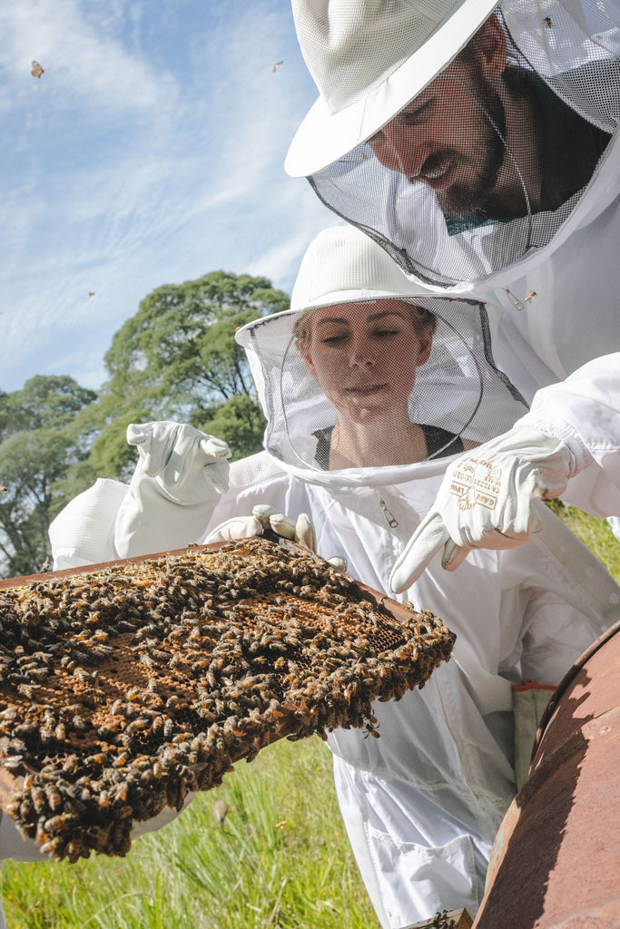 beekeeping 101 sustainable agriculture best raw honey benefits