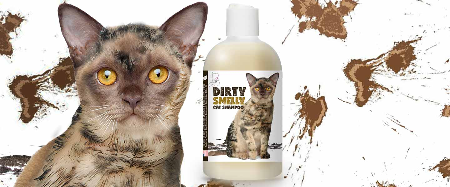 Dirty Smelly Cat Shampoo
