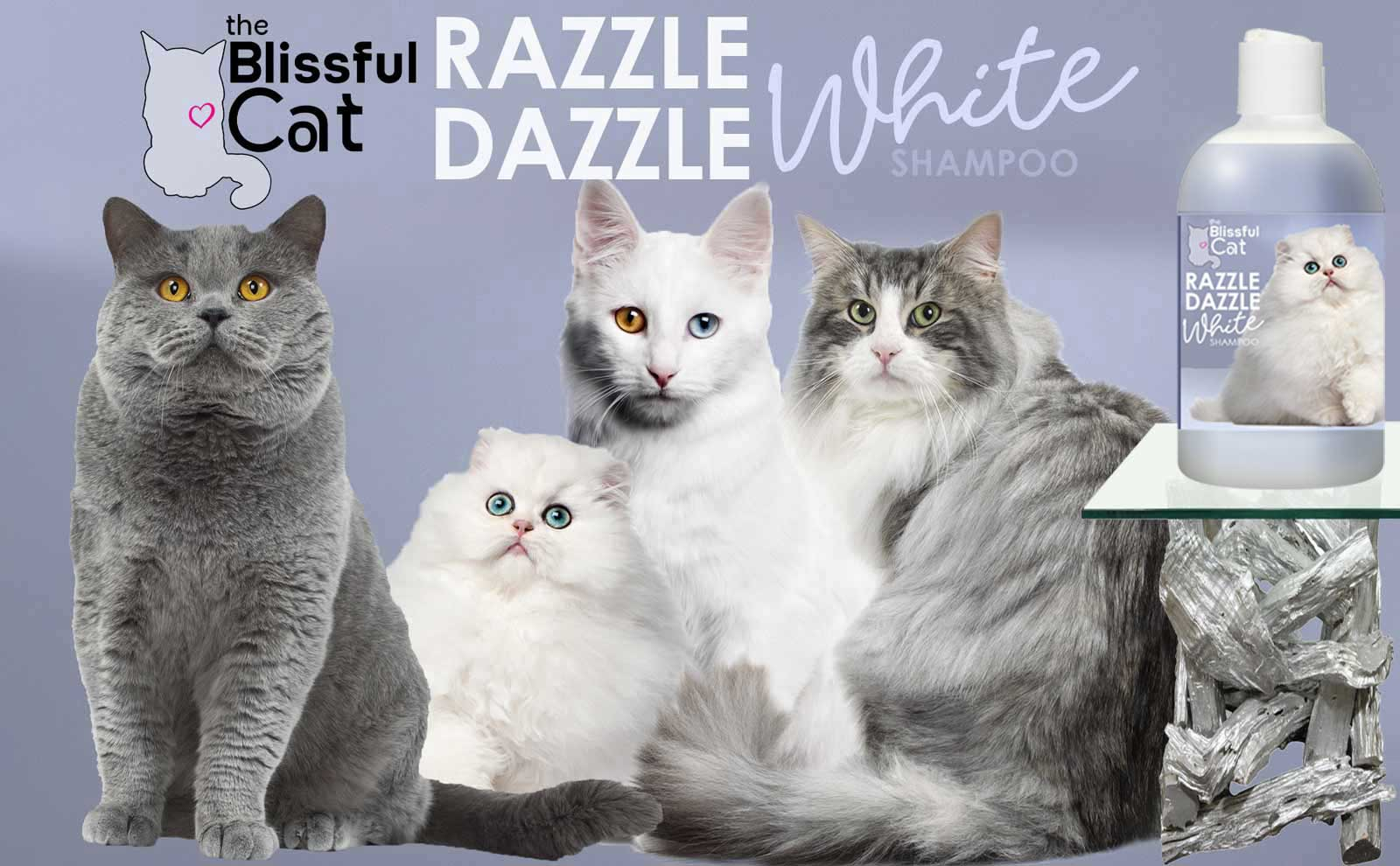 white cat shampoo