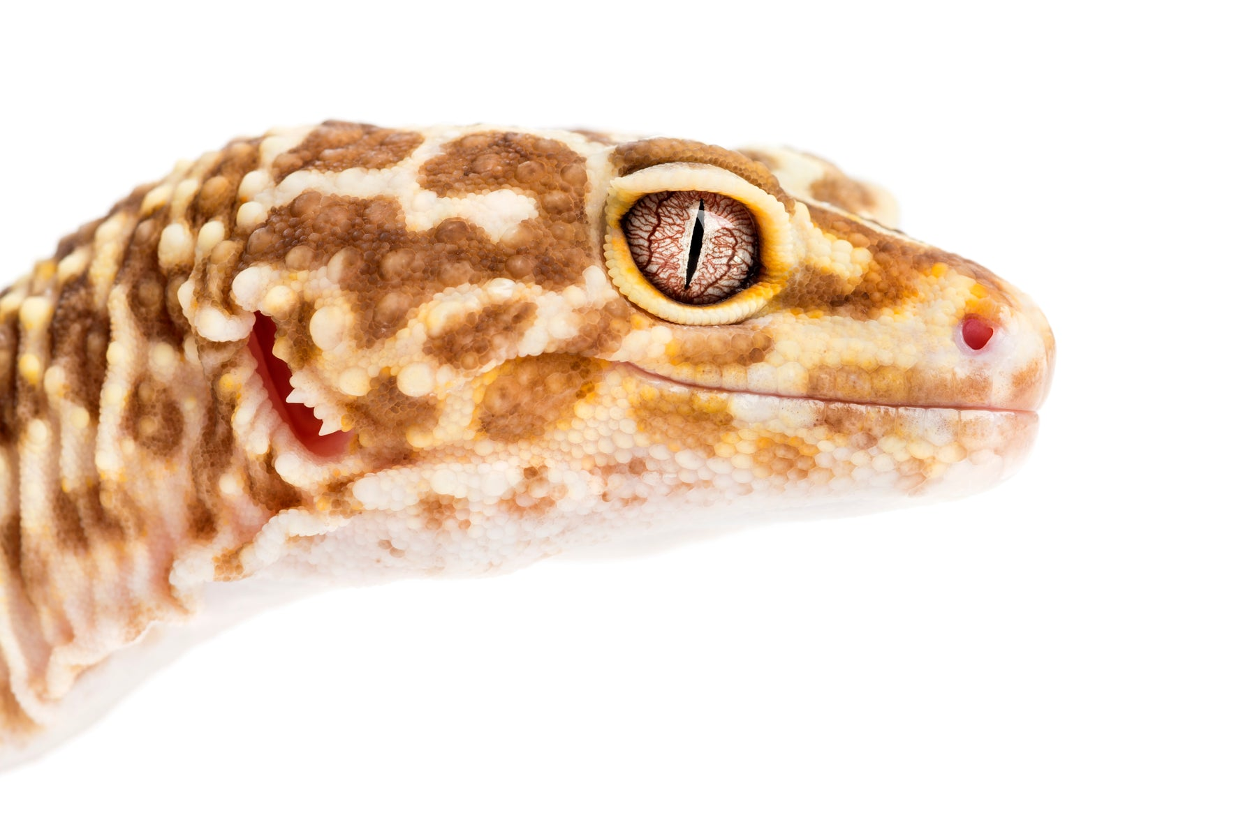 Leopard Gecko Lighting