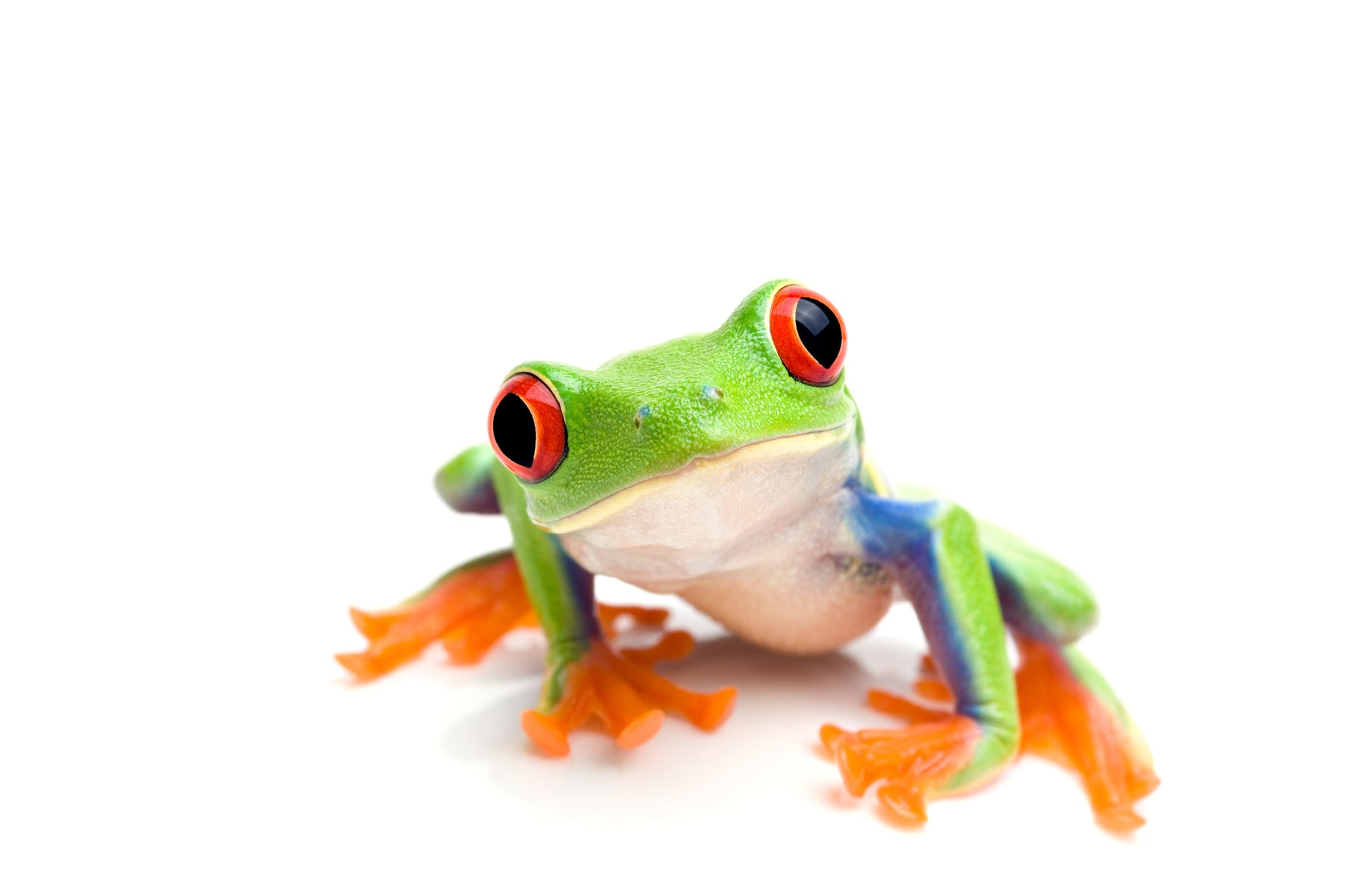 How to Buy a Healthy Pet Reptile/Amphibian