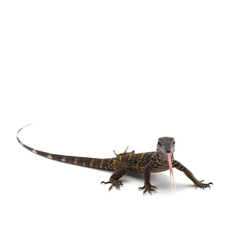 Reptile Supplies & Products + Live Feeders » Reptiles Plus